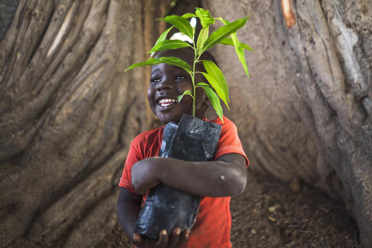Trees for the Future - Bäume pflanzen