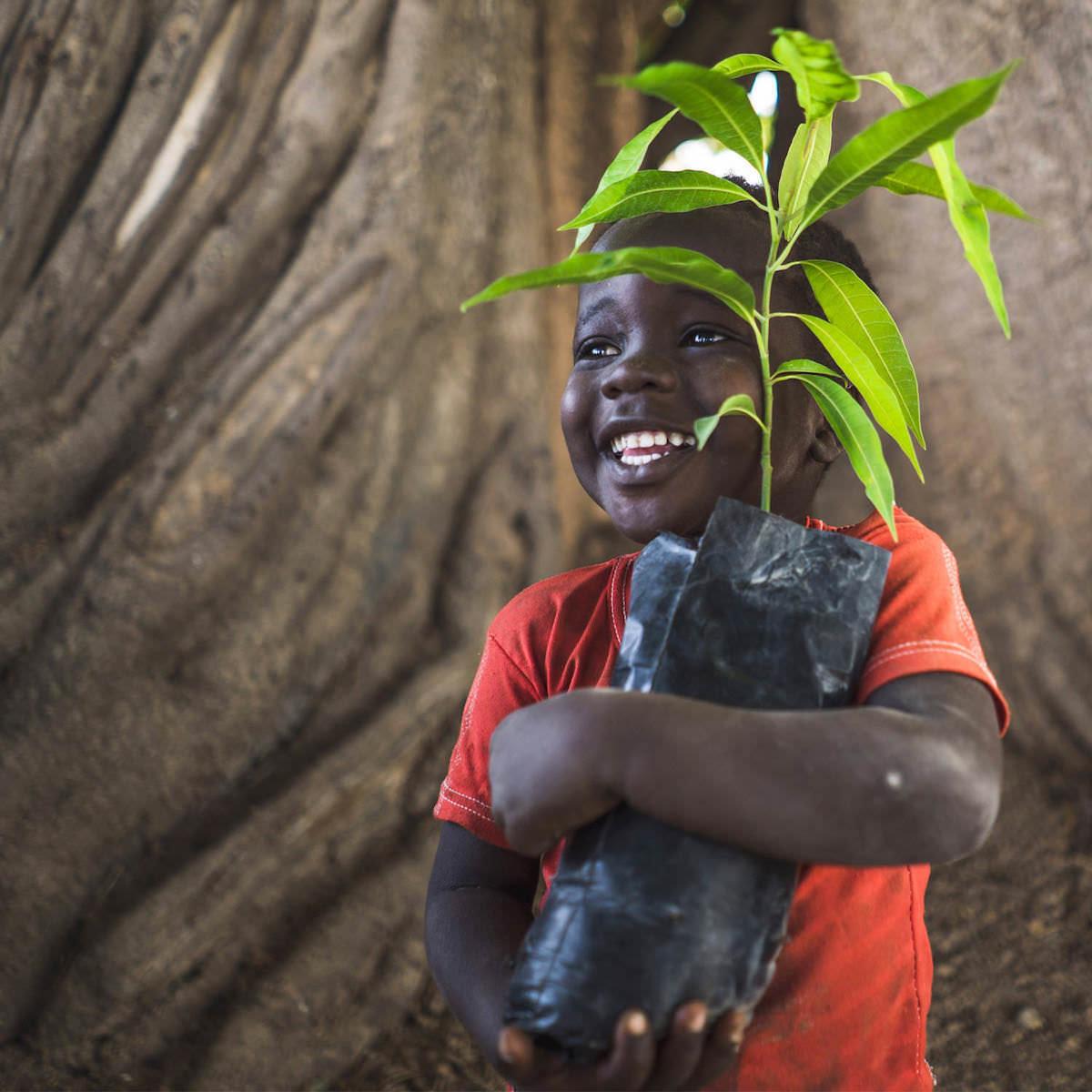 Bäume Pflanzen mit Trees for the Future